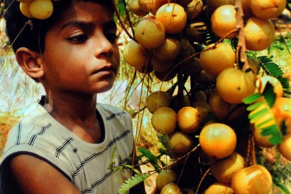 Consolation---'Goose-Berry'--Vijayabhakara-Rao,-Vijayawada