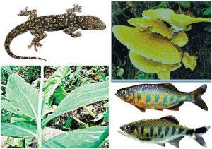01-biodiversity_2916969f